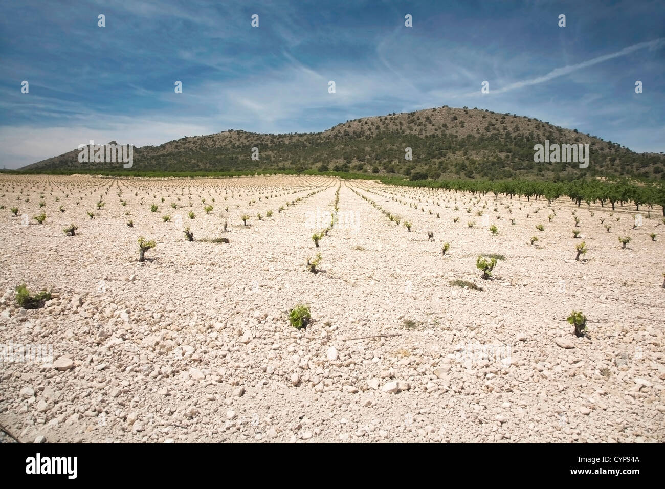 cultivate field at albacete region in spain europe - Stock Image