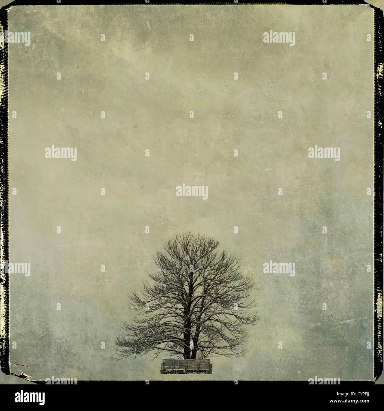 Bare tree, vintage-look, Auvergne, France, Europe - Stock Image