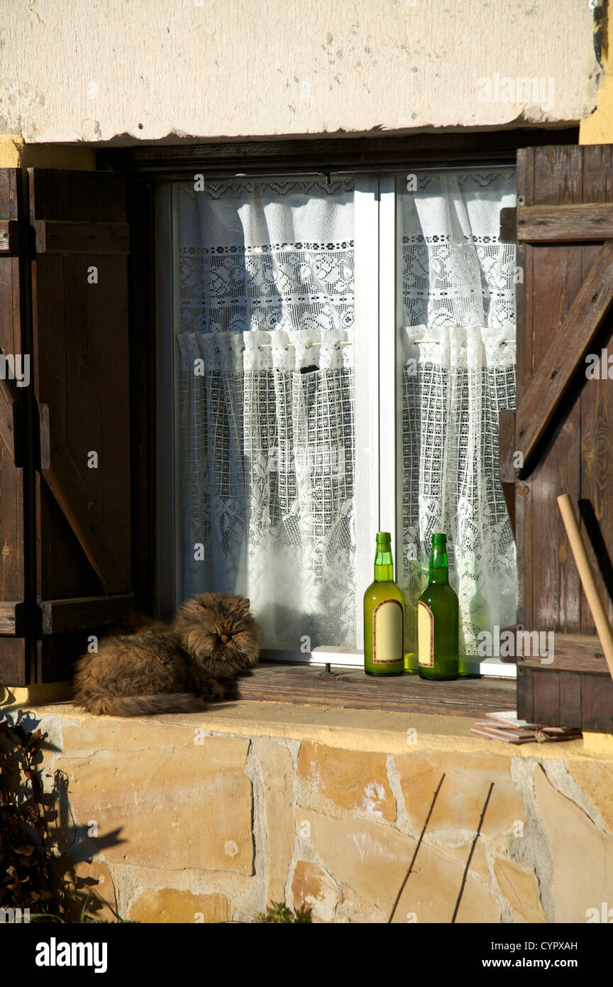 cat sleeping on the cornice window - Stock Image