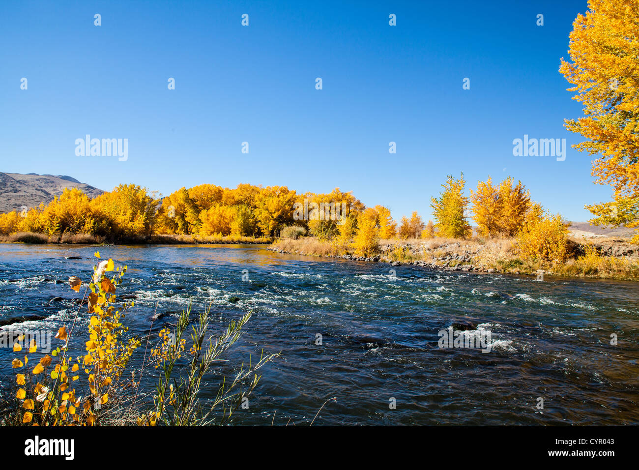 Fall Color along the Truckee River in Northern Nevada at the Tahoe Reno Industrial Center - Stock Image