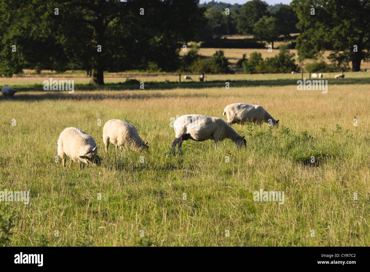 classic english countryside england uk - Stock Image