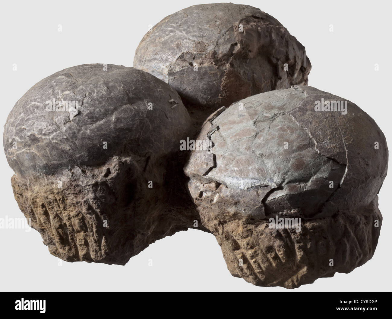 Dinosaur eggs, Triassic/Cretaceous period A fossilized clutch of three eggs with the shells generally in a beautiful - Stock Image