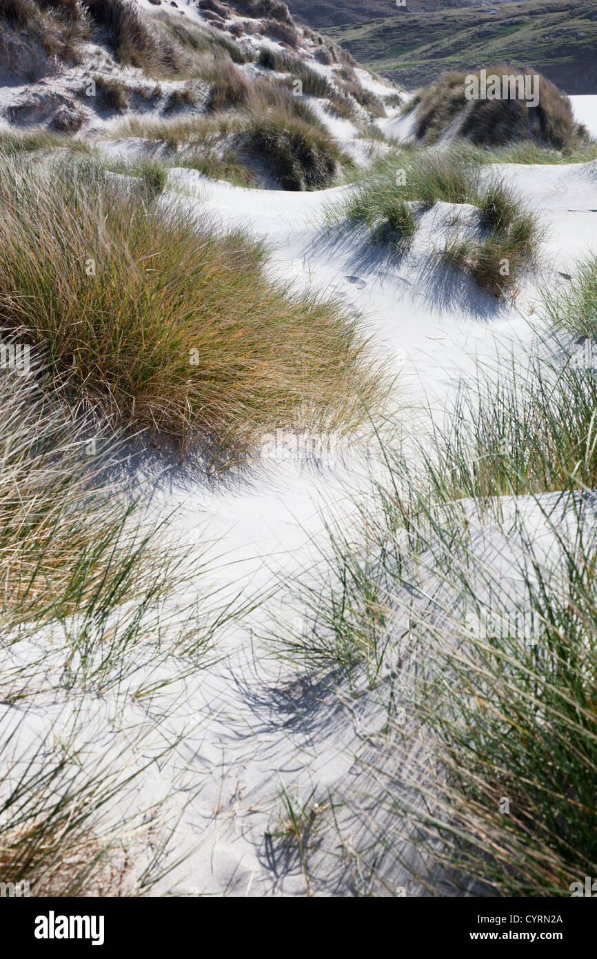 Sand Dunes mostly covered with Marram grass blowing in the breeze, Traigh Eais, Isle of Barra, Outer Hebrides, Scotland, - Stock Image