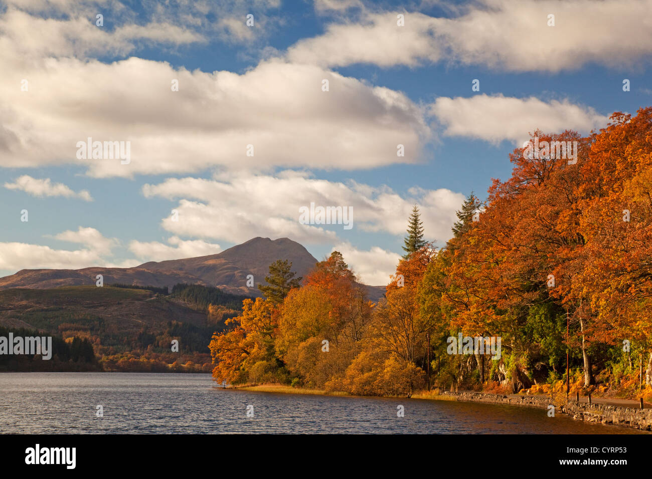 Autumn colours at Loch Ard. Ben Lomond is in the background. - Stock Image