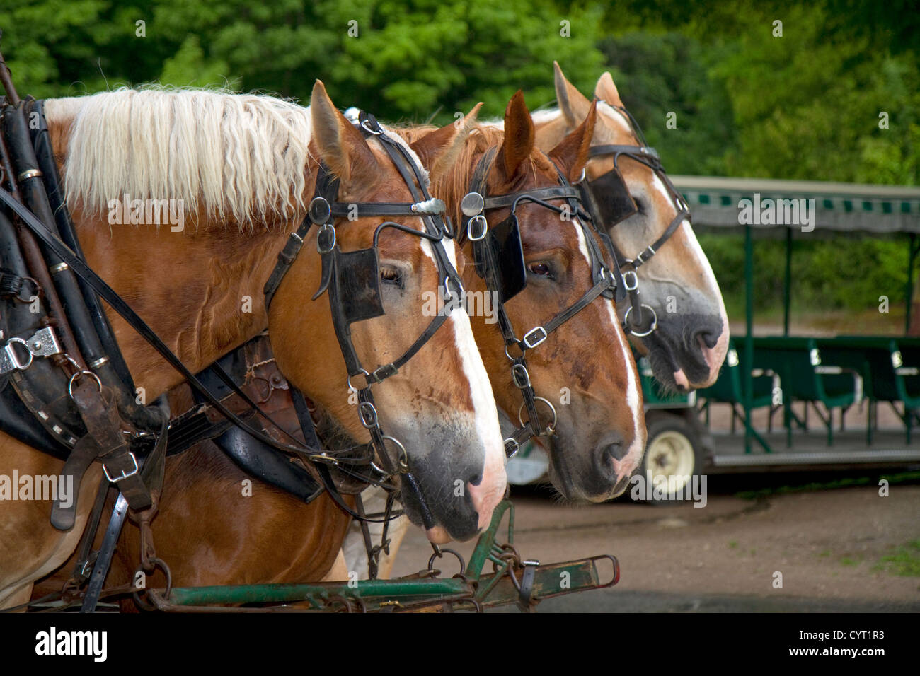 Draft horses on Mackinac Island located in Lake Huron, Michigan, USA. - Stock Image