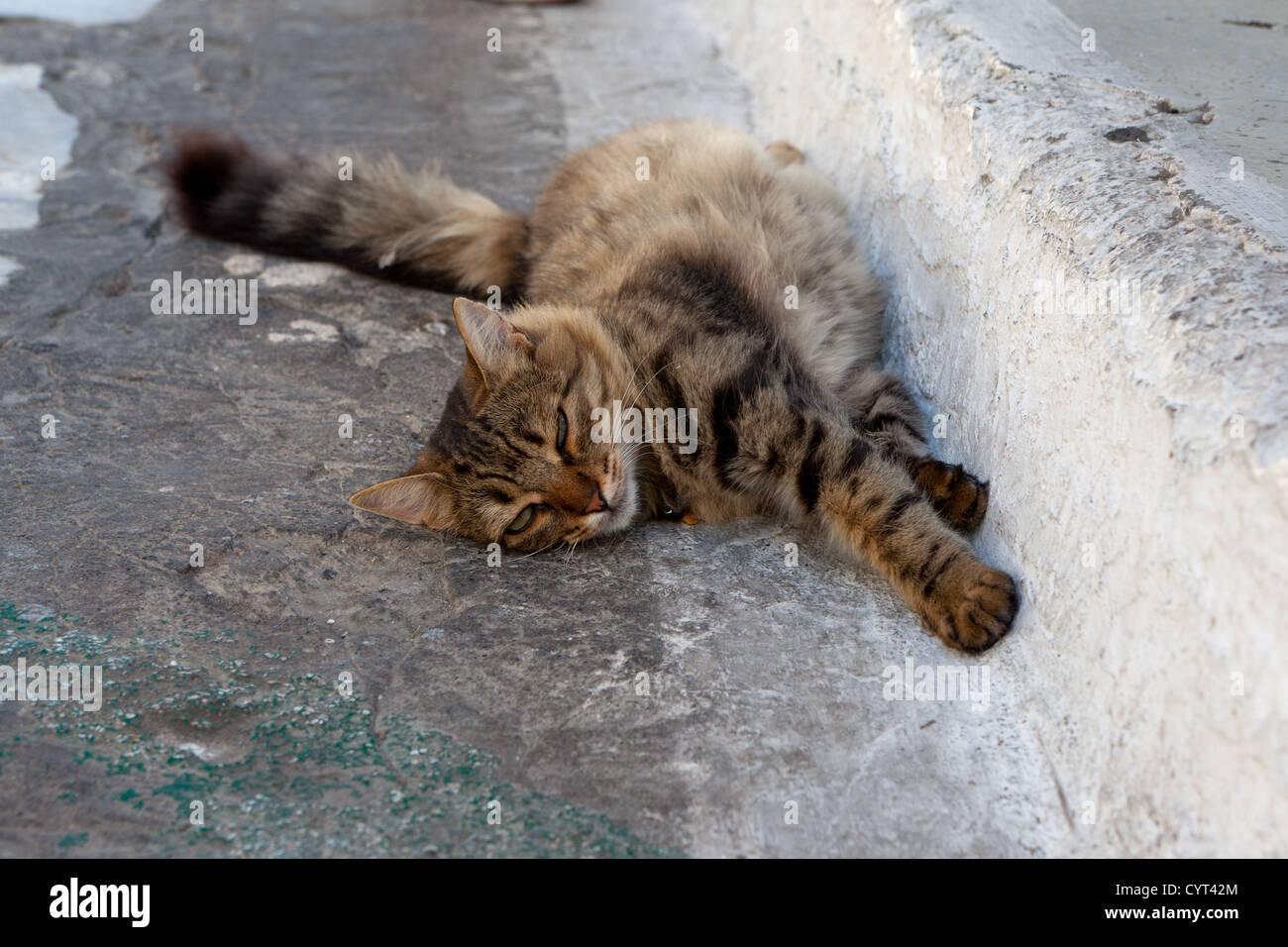 Street tabby cat lies on the асфольте and sleeps Stock Photo
