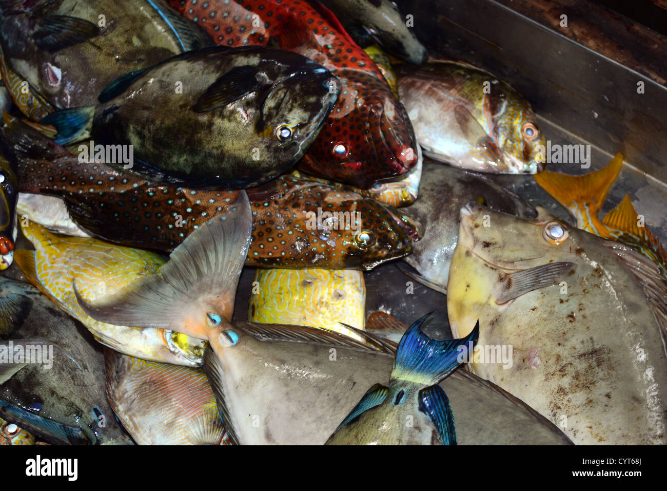 A variety of reef fish, mainly surgeonfish being sold at the local market, Pohnpei, Federated States of Micronesia - Stock Image
