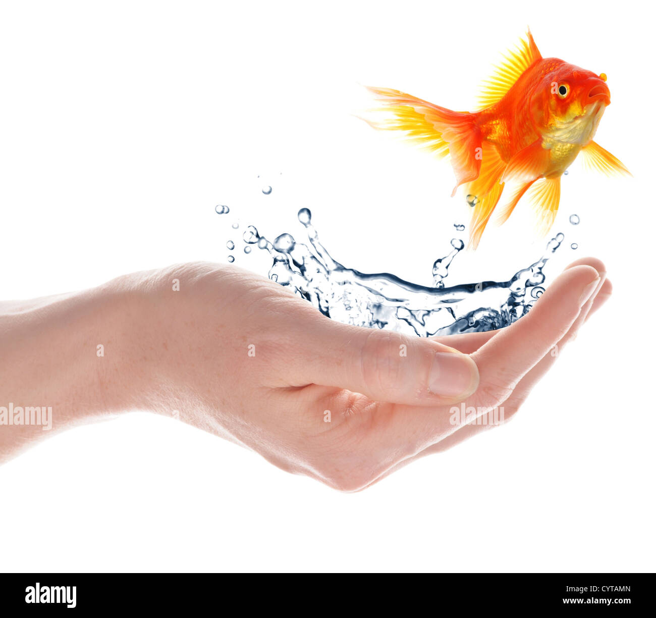 freedom free flee or escape concept with goldfish and hand - Stock Image
