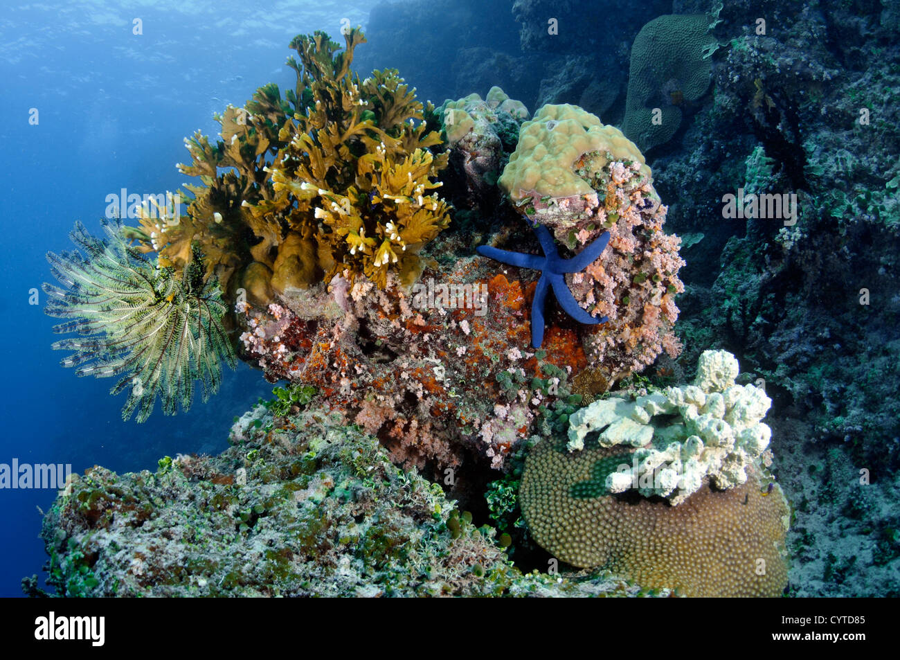 Exuberant coral reef, Pohnpei, Federated States of Micronesia, North Pacific - Stock Image