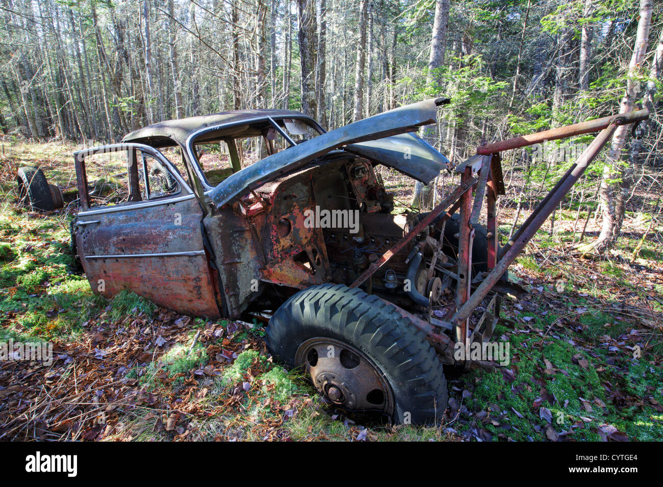 Abandoned 1950s Chevrolet in forest near Elbow Pond in Woodstock, New Hampshire USA - Stock Image