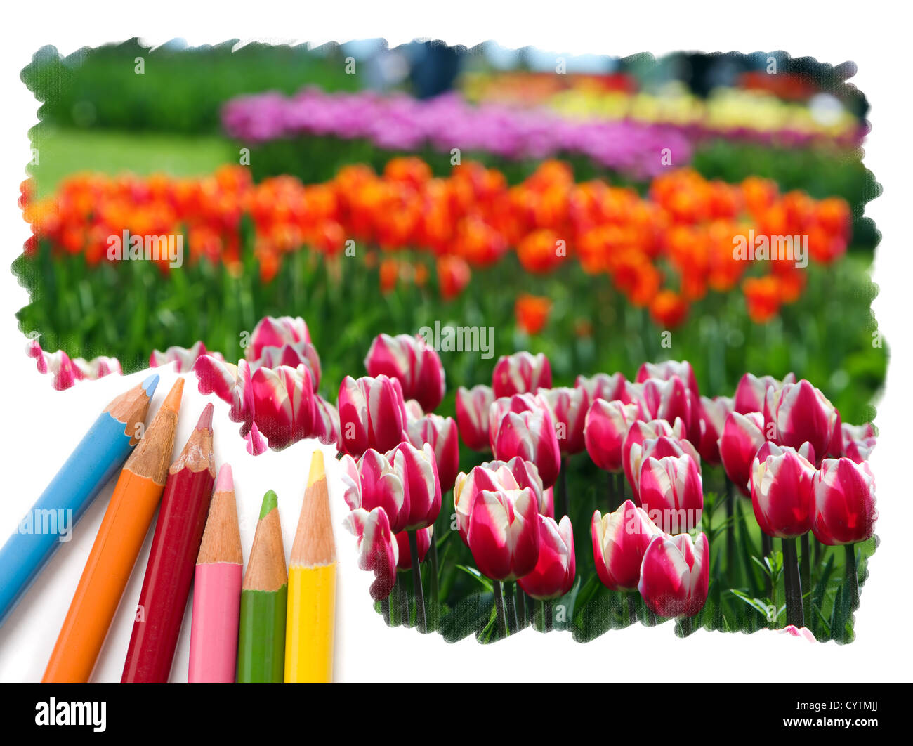 Pencil Drawing Flowers Stock Photos & Pencil Drawing Flowers Stock ...