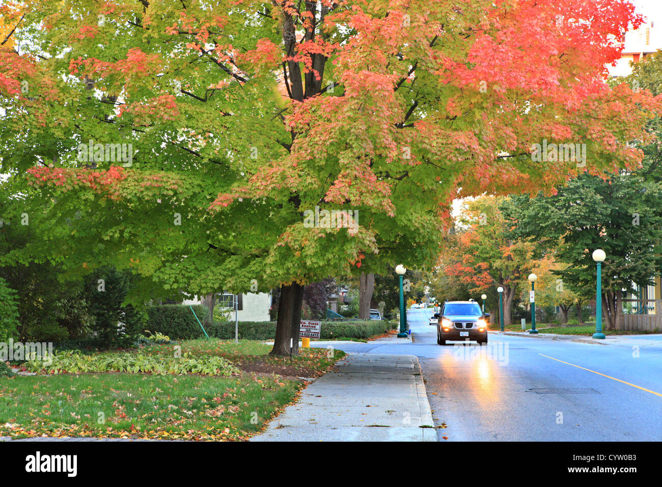 Beautiful color changing of maple foliage in autumn, Ontario, Canada ...