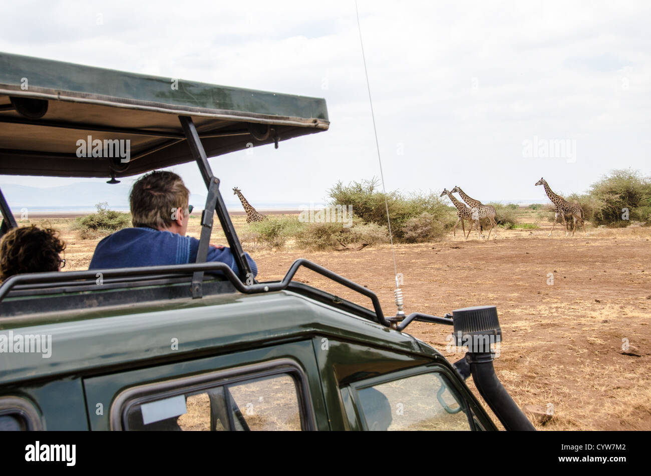 LAKE MANYARA NATIONAL PARK, Tanzania - Tourists in a pop-up top safari vehicle watch a group of giraffes walking - Stock Image