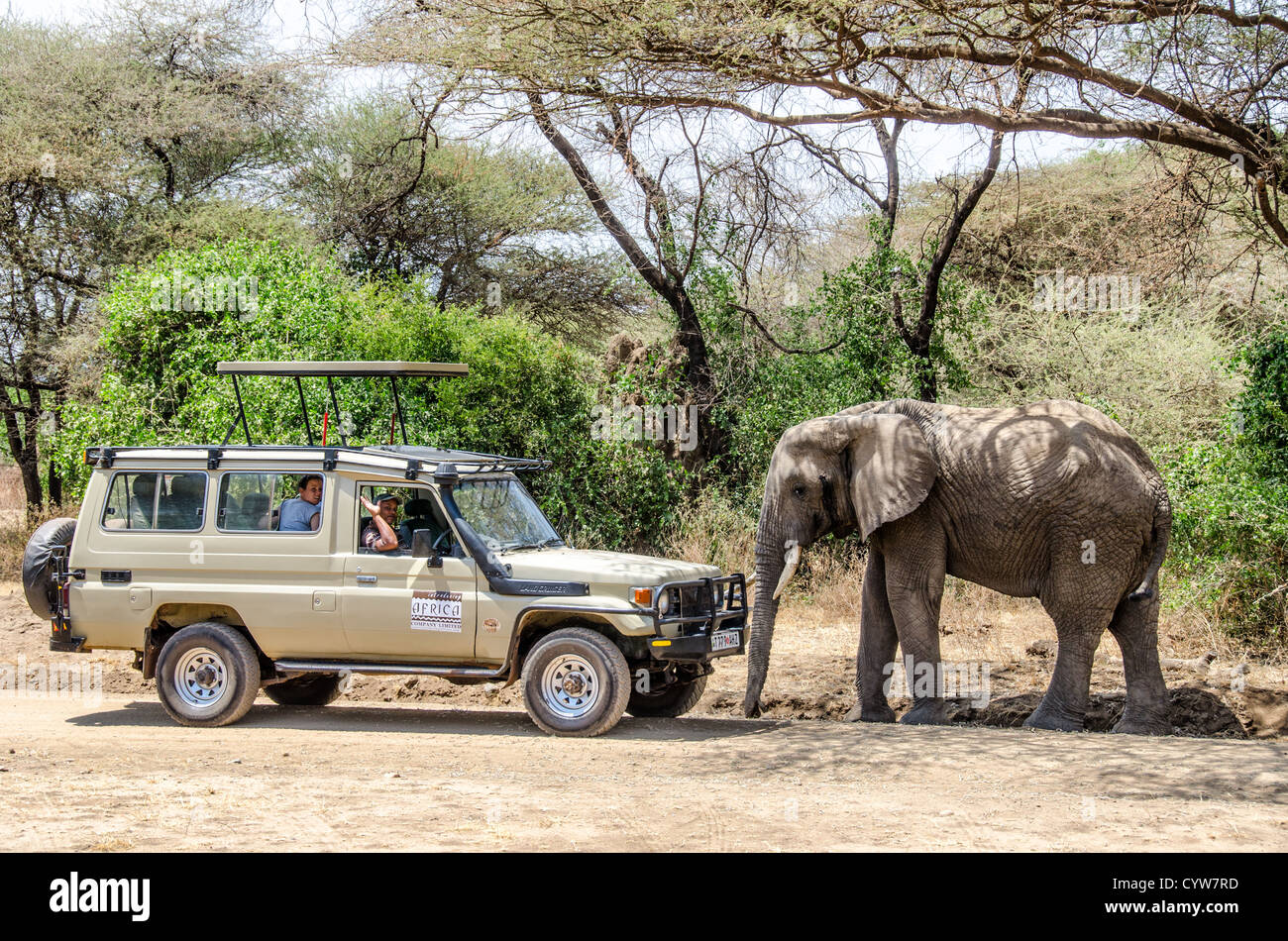 LAKE MANYARA NATIONAL PARK, Tanzania - An elephant walks up to a safari vehicle with tourists at Lake Manyara National - Stock Image