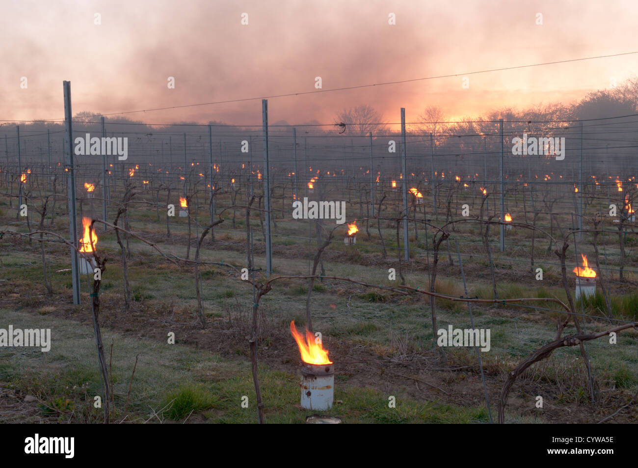 Paraffin burner 'bougies' lit in vineyard in West Sussex, UK to protect grapes from frost. Dawn. April. Stock Photo