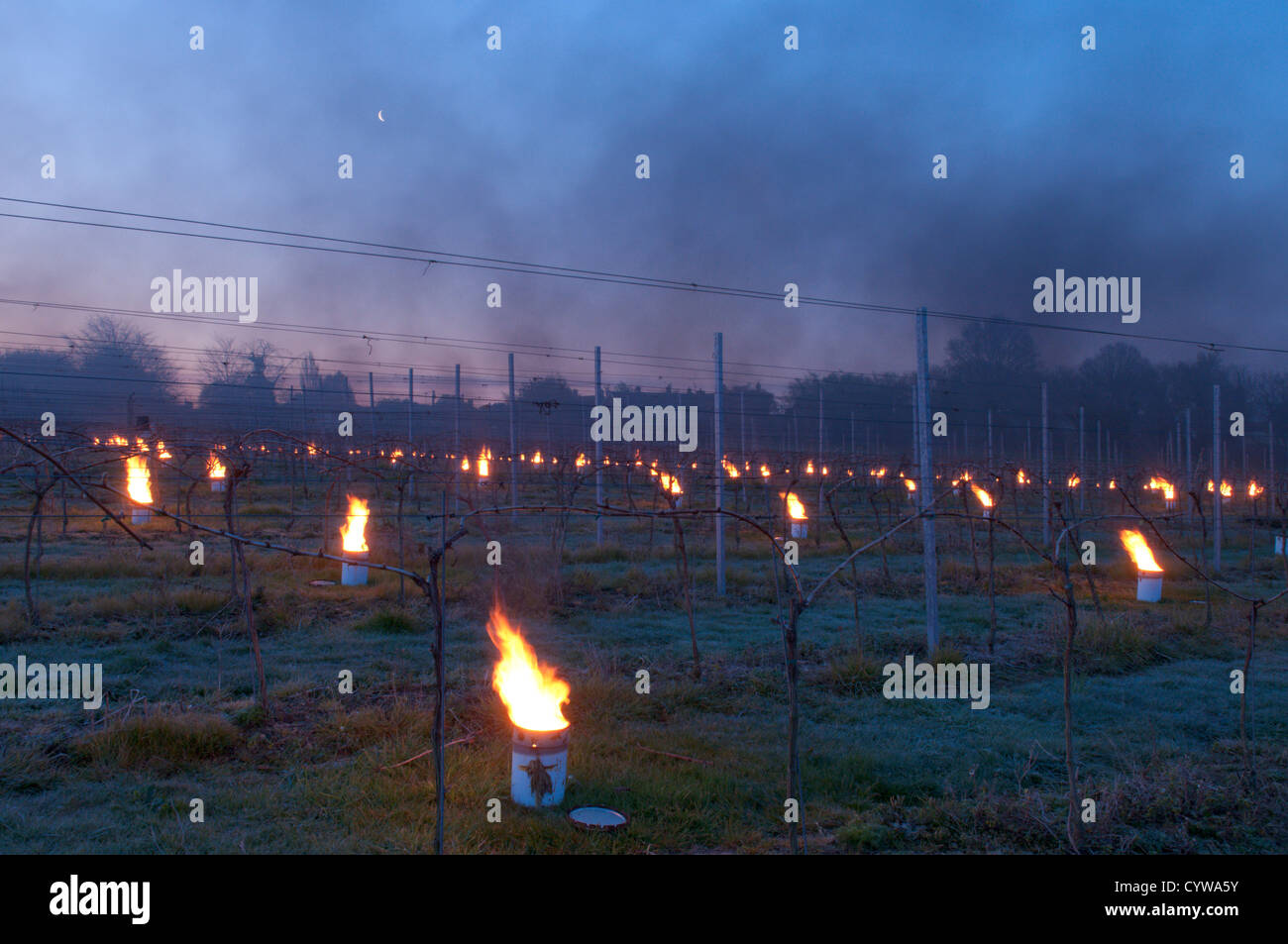 Paraffin burner 'bougies' lit in vineyard in West Sussex, UK to protect grapes from frost. Dawn. April. - Stock Image