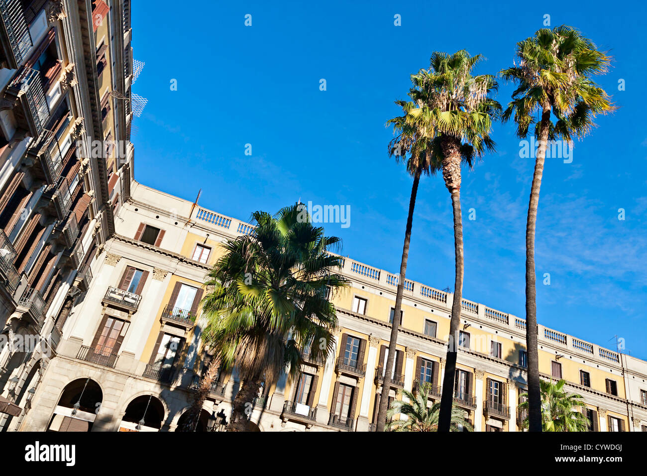Palm trees at Placa Reial, Barcelona - Stock Image