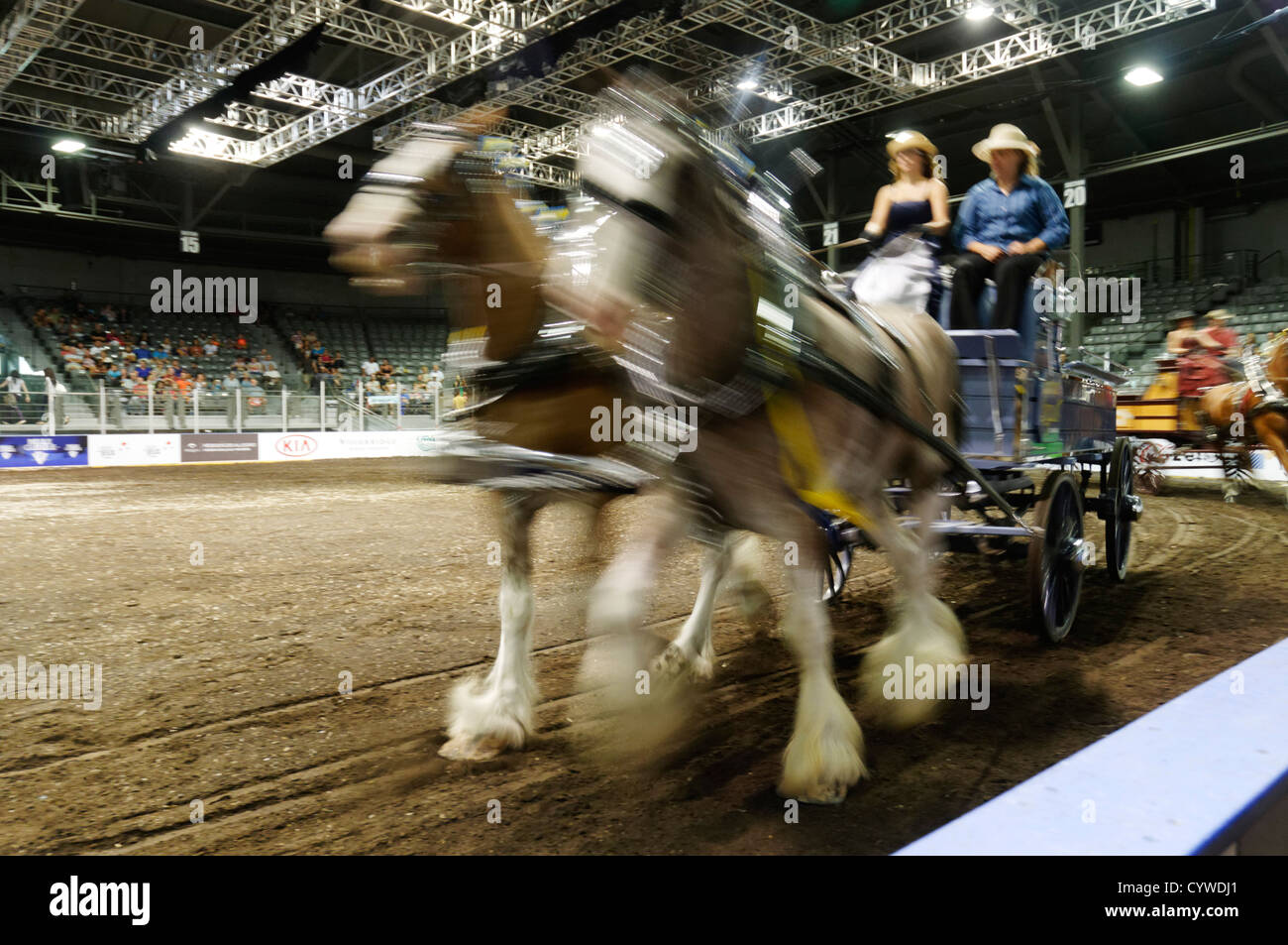 AN indoor harnessed horse and trap show in Quebec City - Stock Image