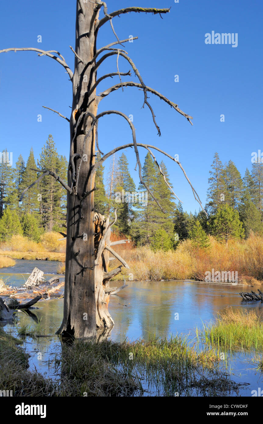 River marsh in the High Sierra mountains - Stock Image