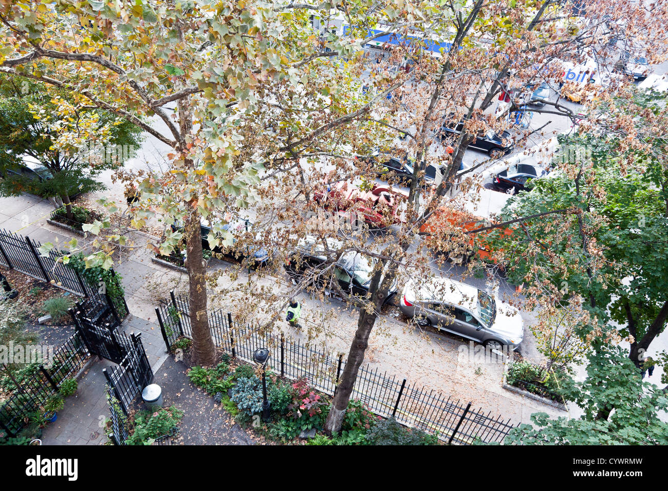 tree surgeon in cherry picker begins dismantling tree uprooted by hurricane Sandy & impaled on garden fence - Stock Image