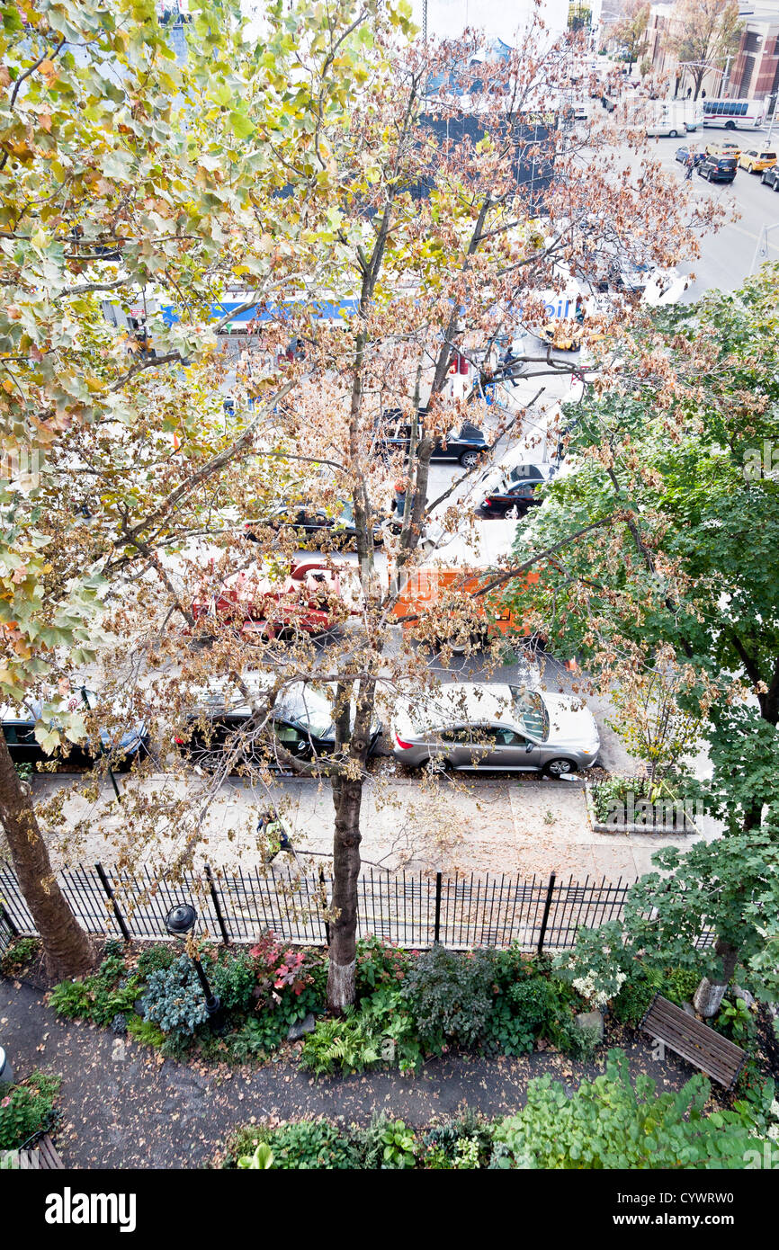 tree surgeon in cherry picker using saw to begin dismantling tree uprooted by hurricane Sandy & impaled on garden - Stock Image