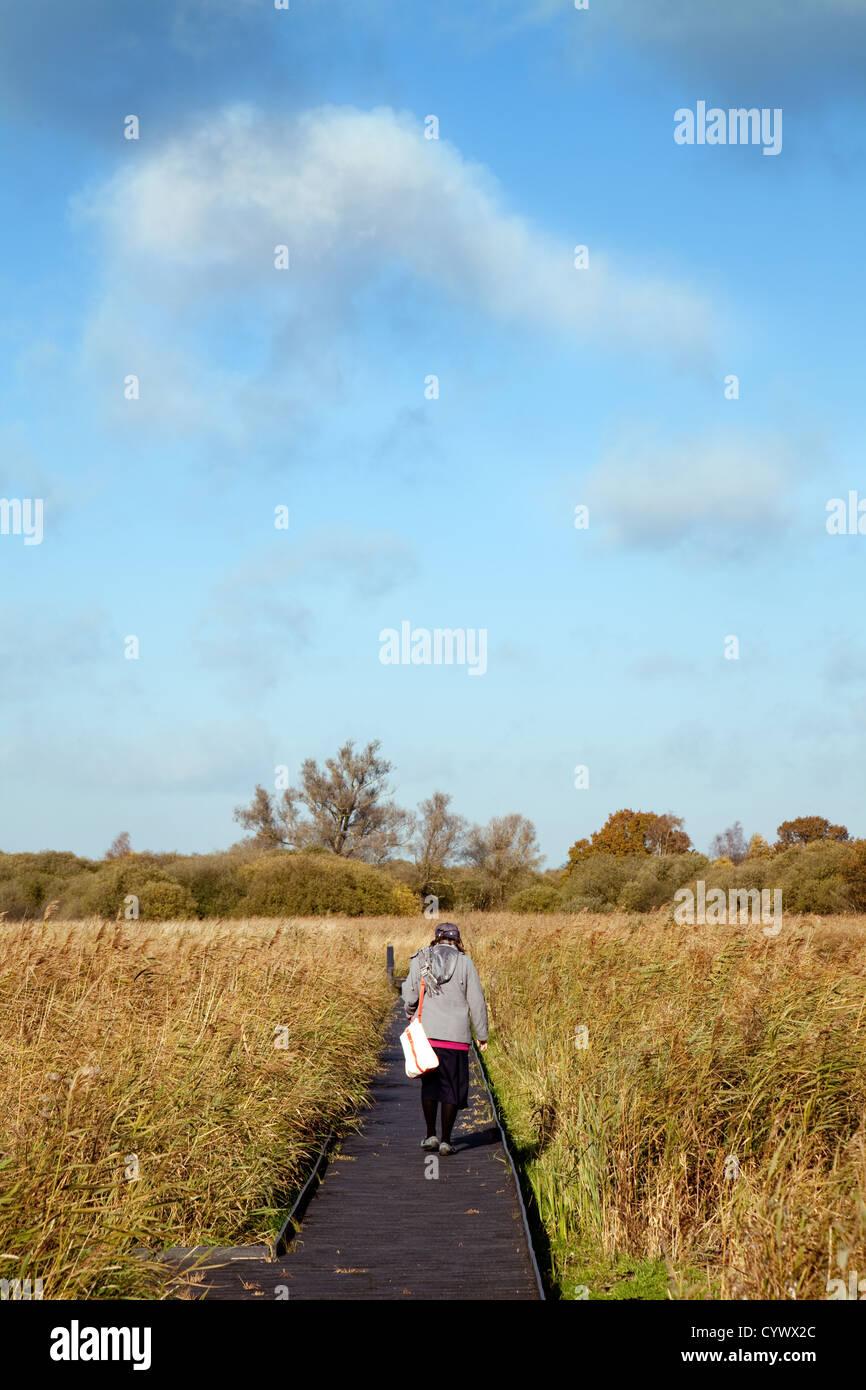 A lone woman walking on the boardwalk, Wicken Fen, cambridgeshire East Anglia UK - Stock Image
