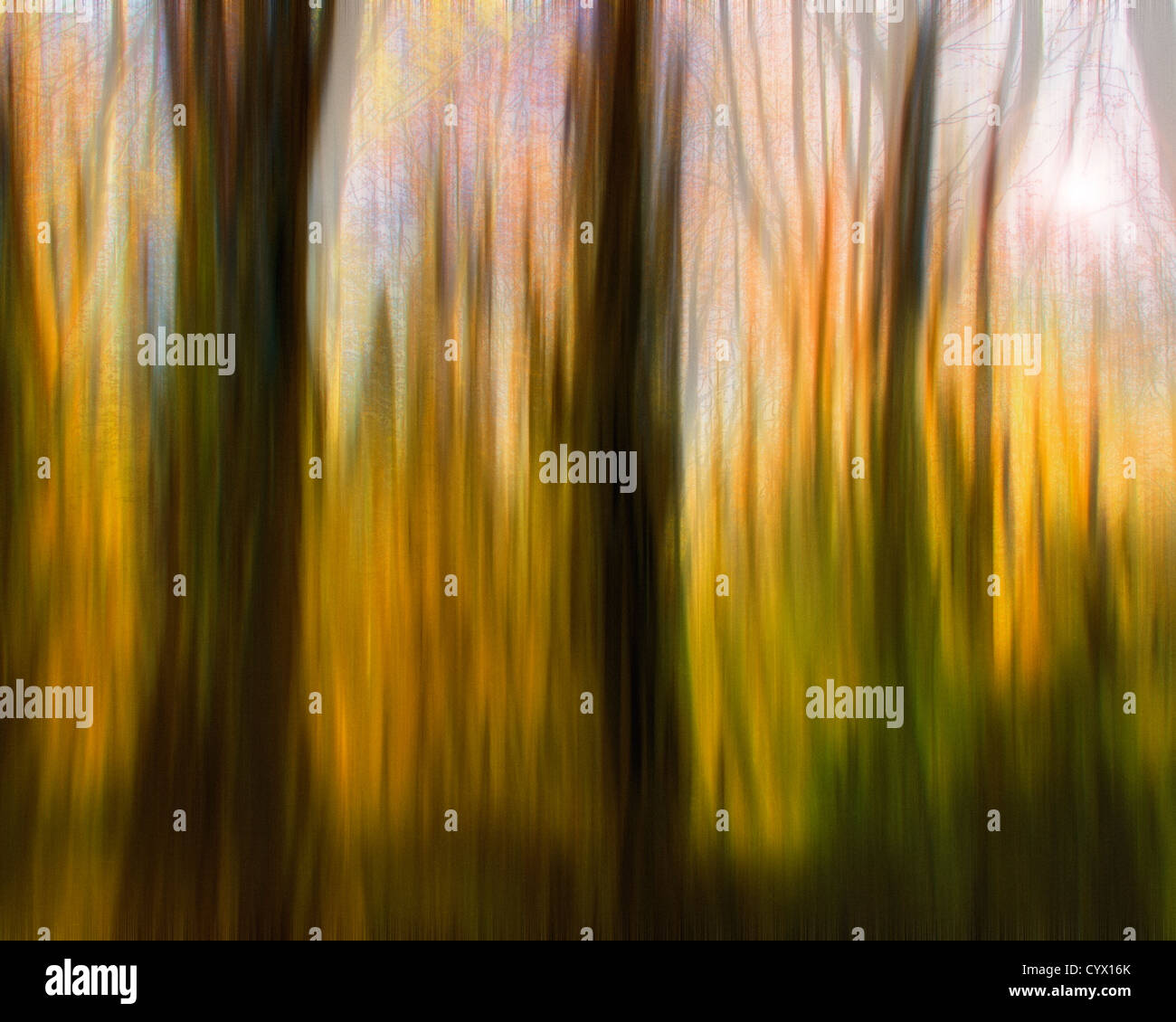 DIGITAL ART: Magic Woods (Calendar Concept) - Stock Image