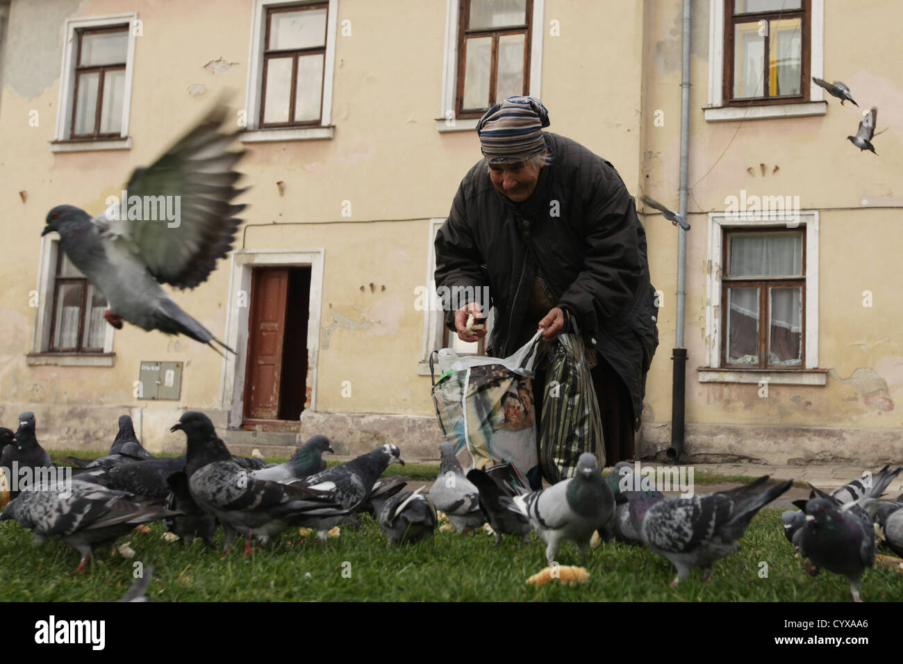 Old woman feeds the birds Zamosc, Poland - Stock Image