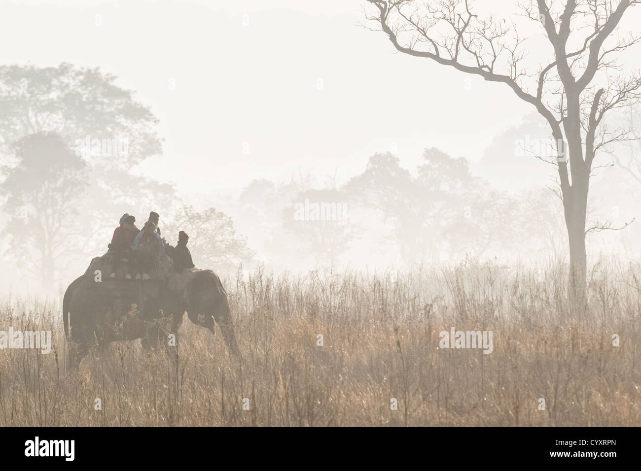 India, Uttarakhand, Mahout with tourists at Jim Corbett National Park - Stock Image