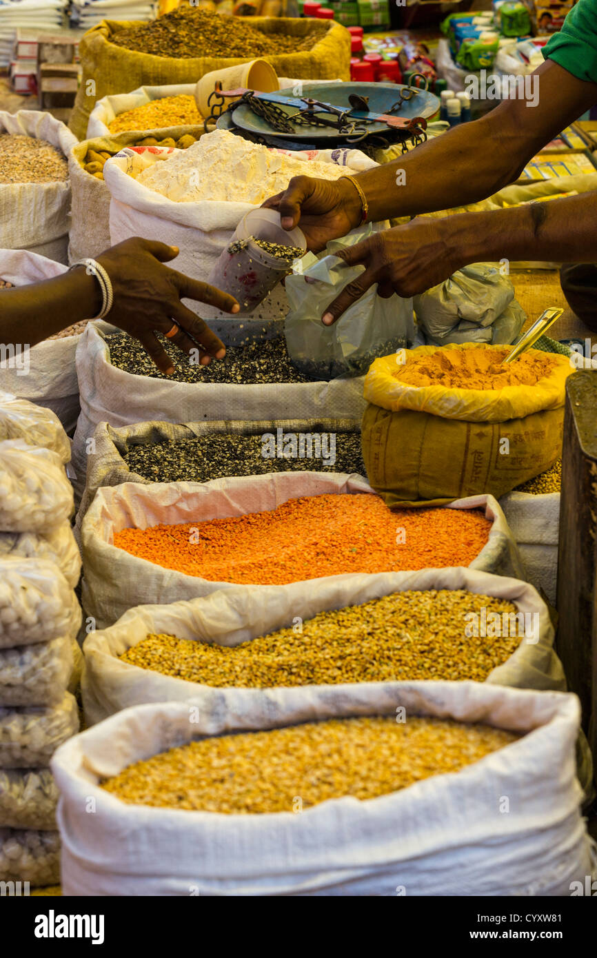 India, Madhya Pradesh, Mung Dal, urid dal and other types of lentils for sale on market - Stock Image
