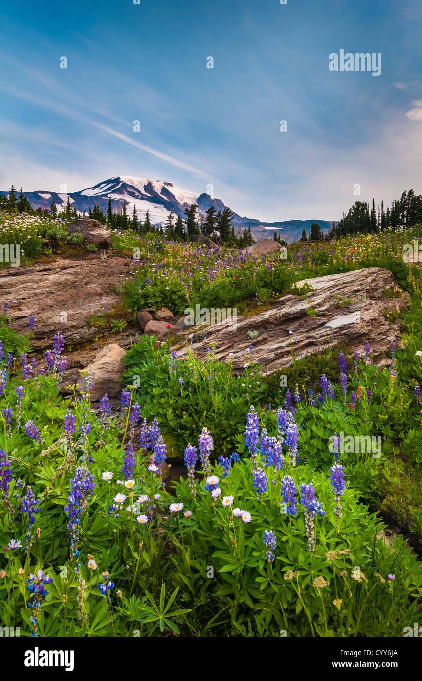Bird Creek Meadows and Mount Adams, Cascade Mountains, Washington - Stock Image