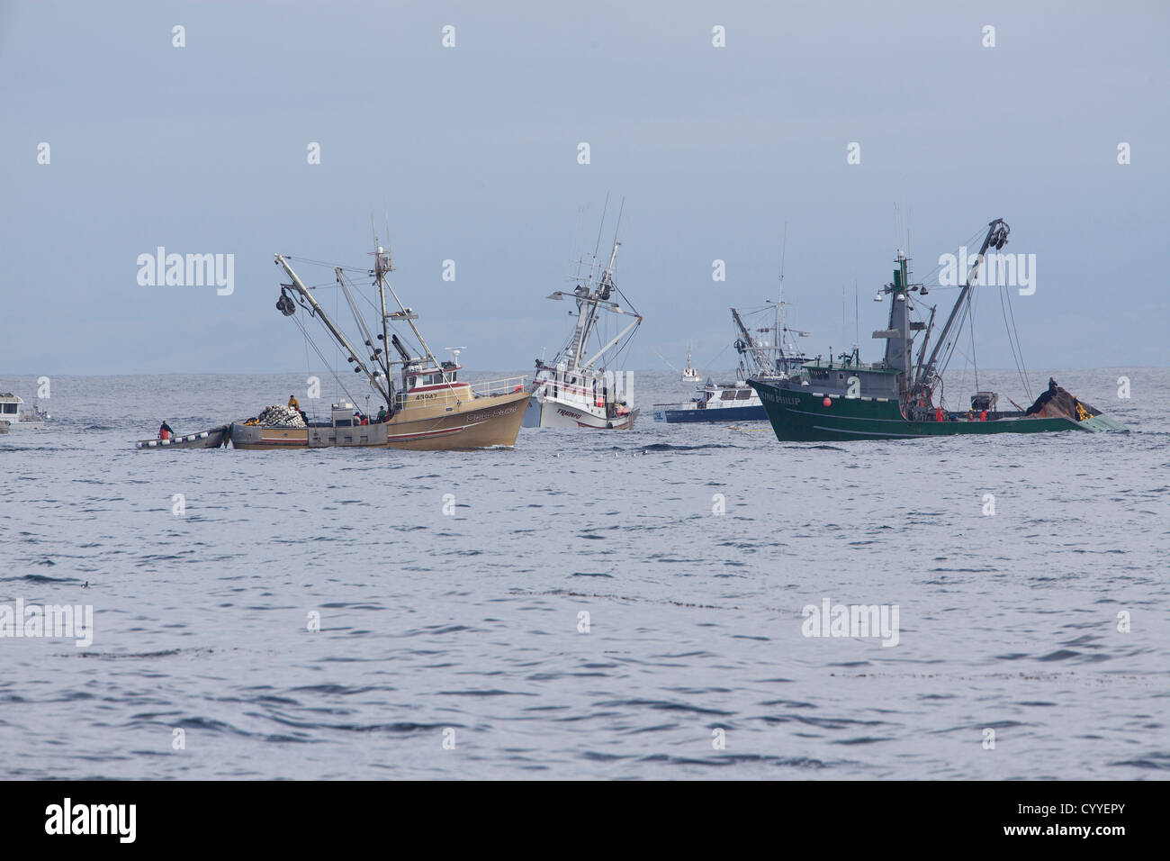 Fishermen pull in their catch on Monterey Bay, California. - Stock Image