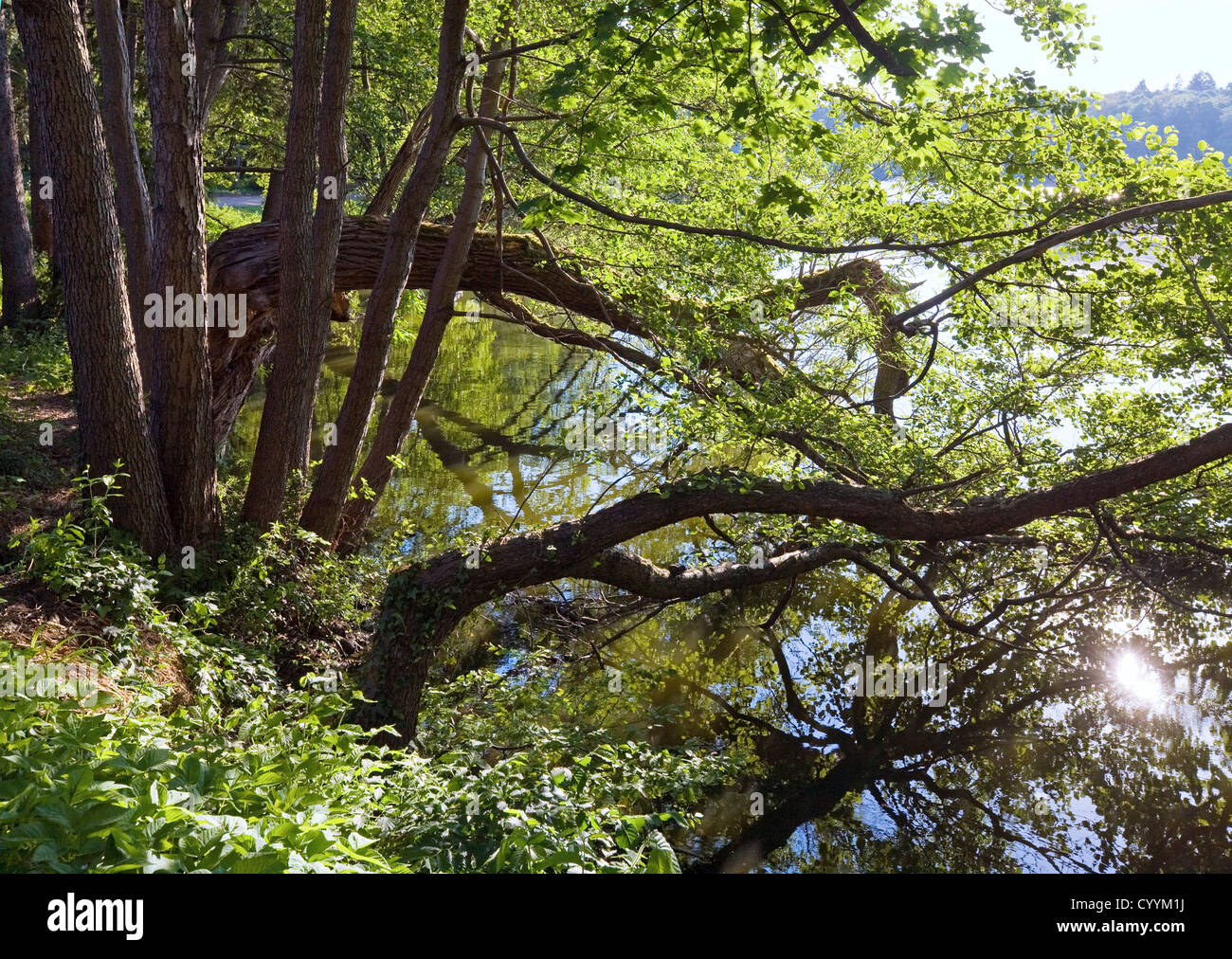 Summer lake with patch of sunlight and tree reflection on water surface. - Stock Image