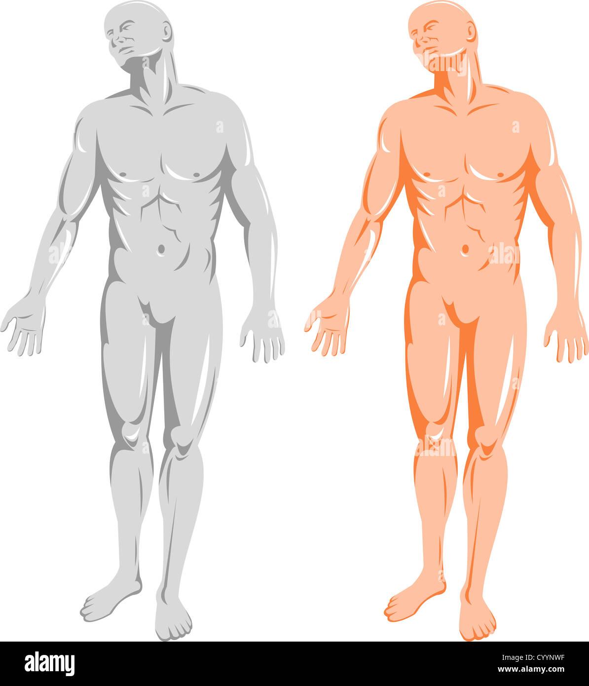 Anatomy Man Standing Illustration Stock Photos & Anatomy Man ...