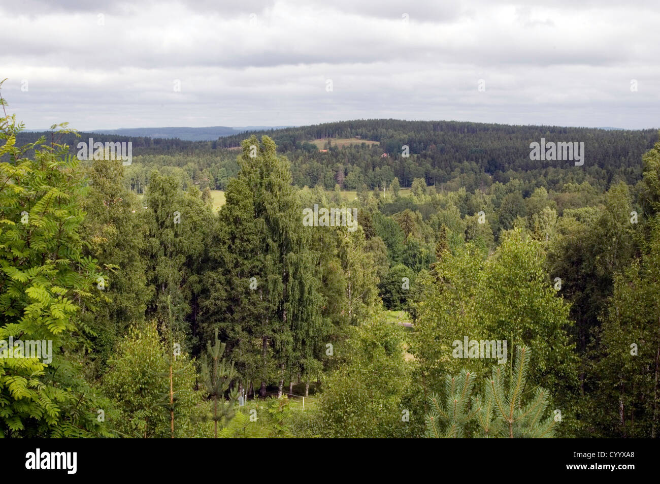 swedish forest forests sweden pine tree trees wood timber industry forestry pines Scandinavia Scandinavian - Stock Image