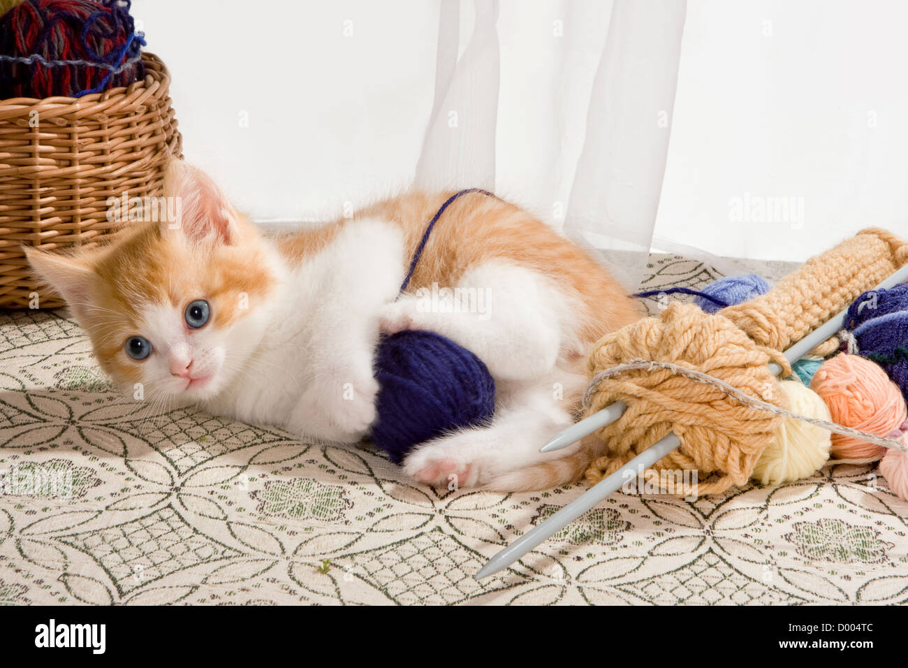 Six weeks old kitten being naughty with knitting wool Stock Photo