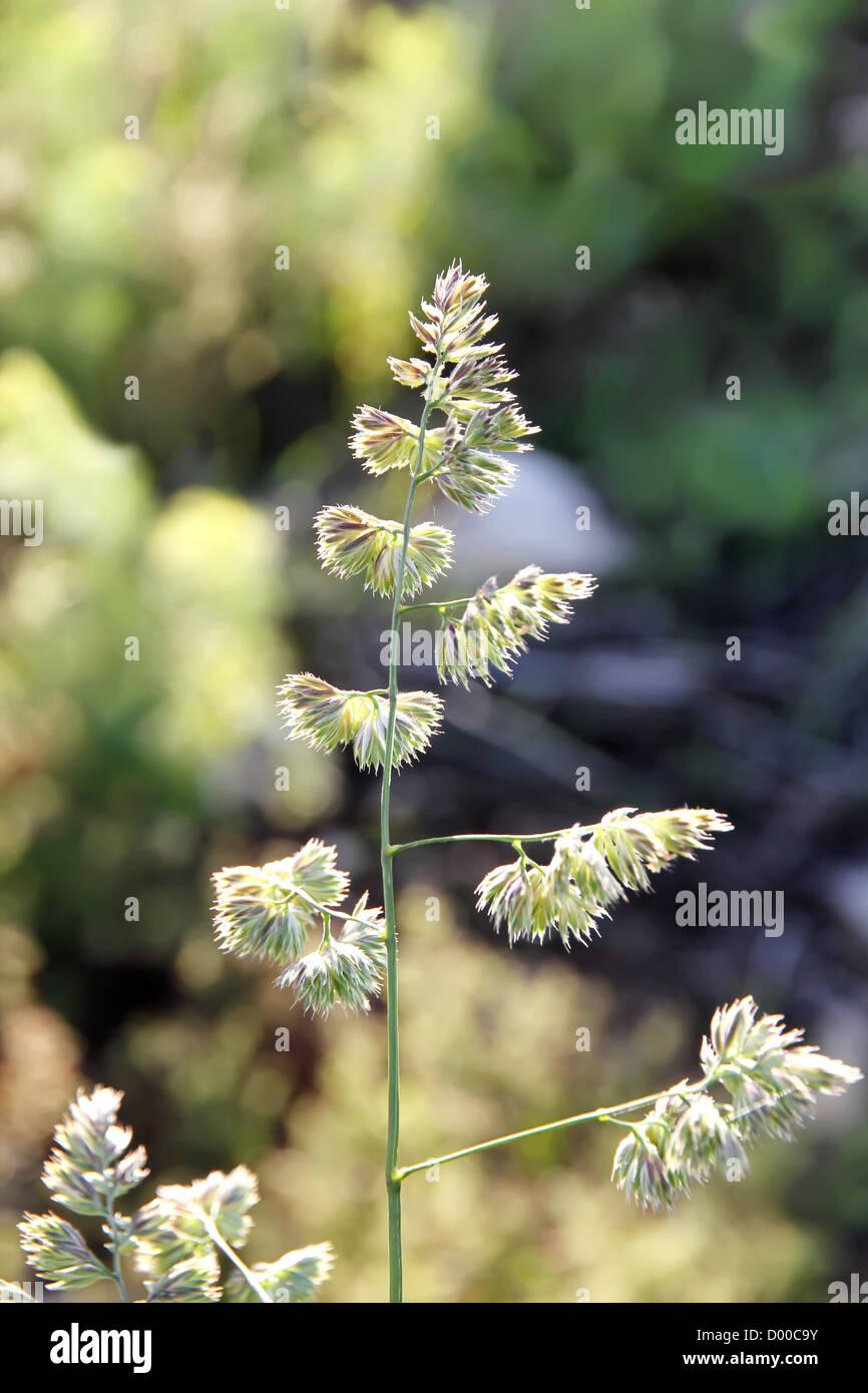 Dmt Plants Stock Photos & Dmt Plants Stock Images - Alamy