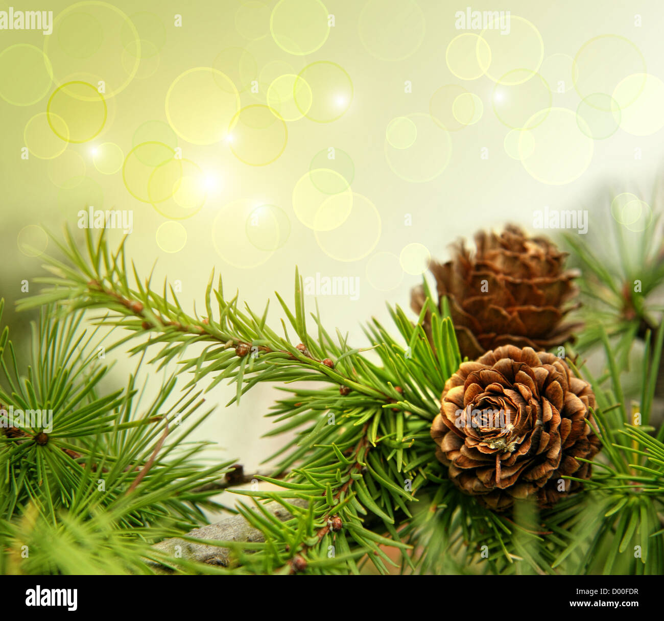 Pine cones on branches with holiday background - Stock Image