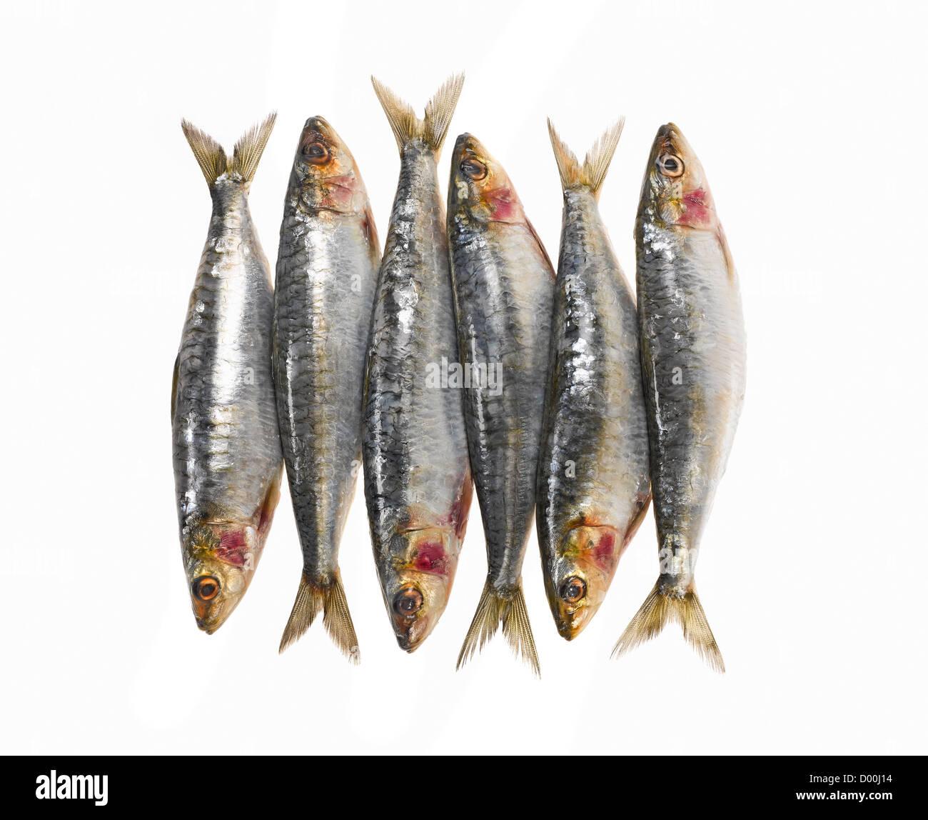 fresh whole sardines - Stock Image