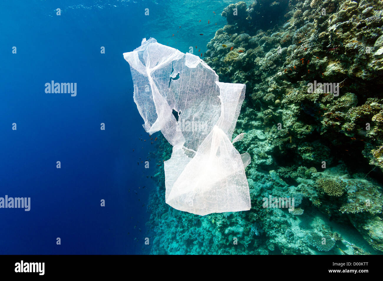 A waste plastic bag floats in the sea next to a coral reef wall - Stock Image