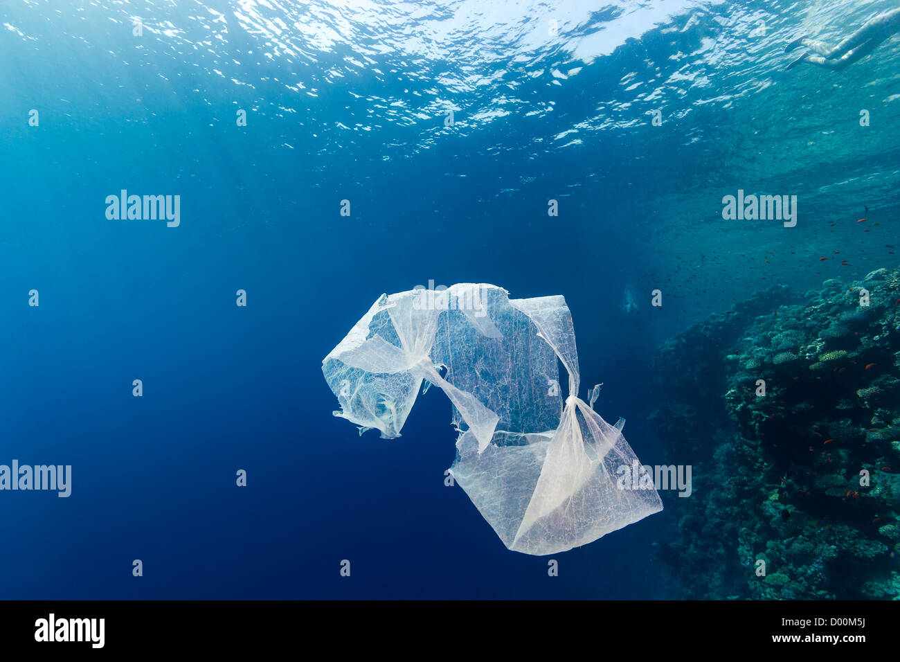 A discarded waste plastic bag floats in open ocean near a coral reef wall in the Red Sea - Stock Image