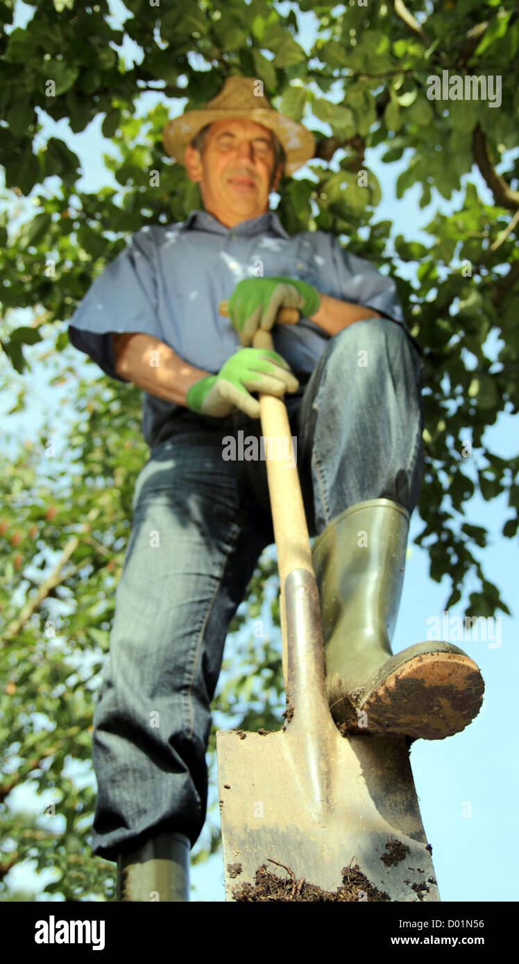 Gardener with straw hat digging compost - Stock Image