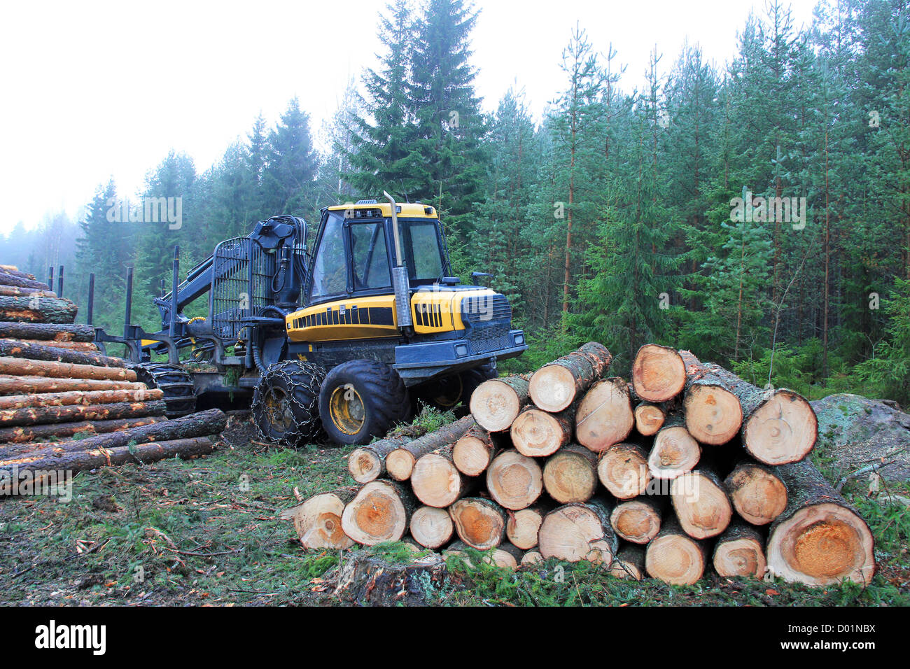 Forwarder and stacks of logs at the edge of forest in autumn mist. Stock Photo