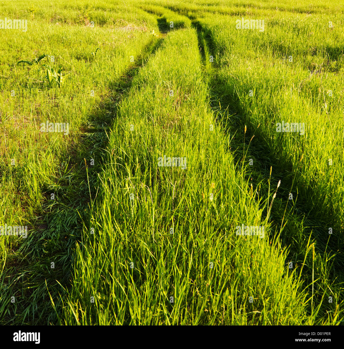 Road in field meadows - Stock Image