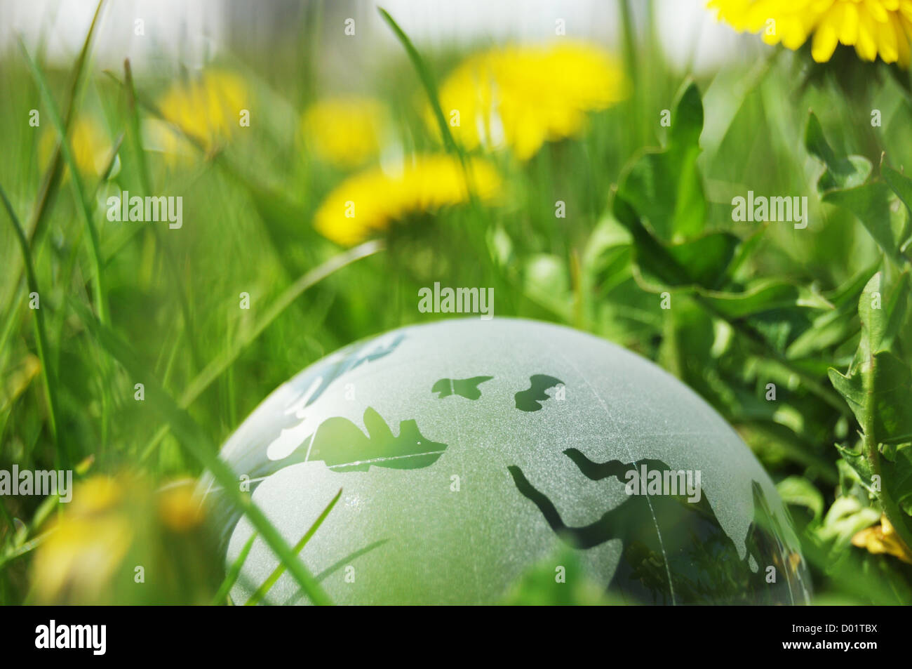 glass globe or earth in green grass showing eco concept with copyspace - Stock Image