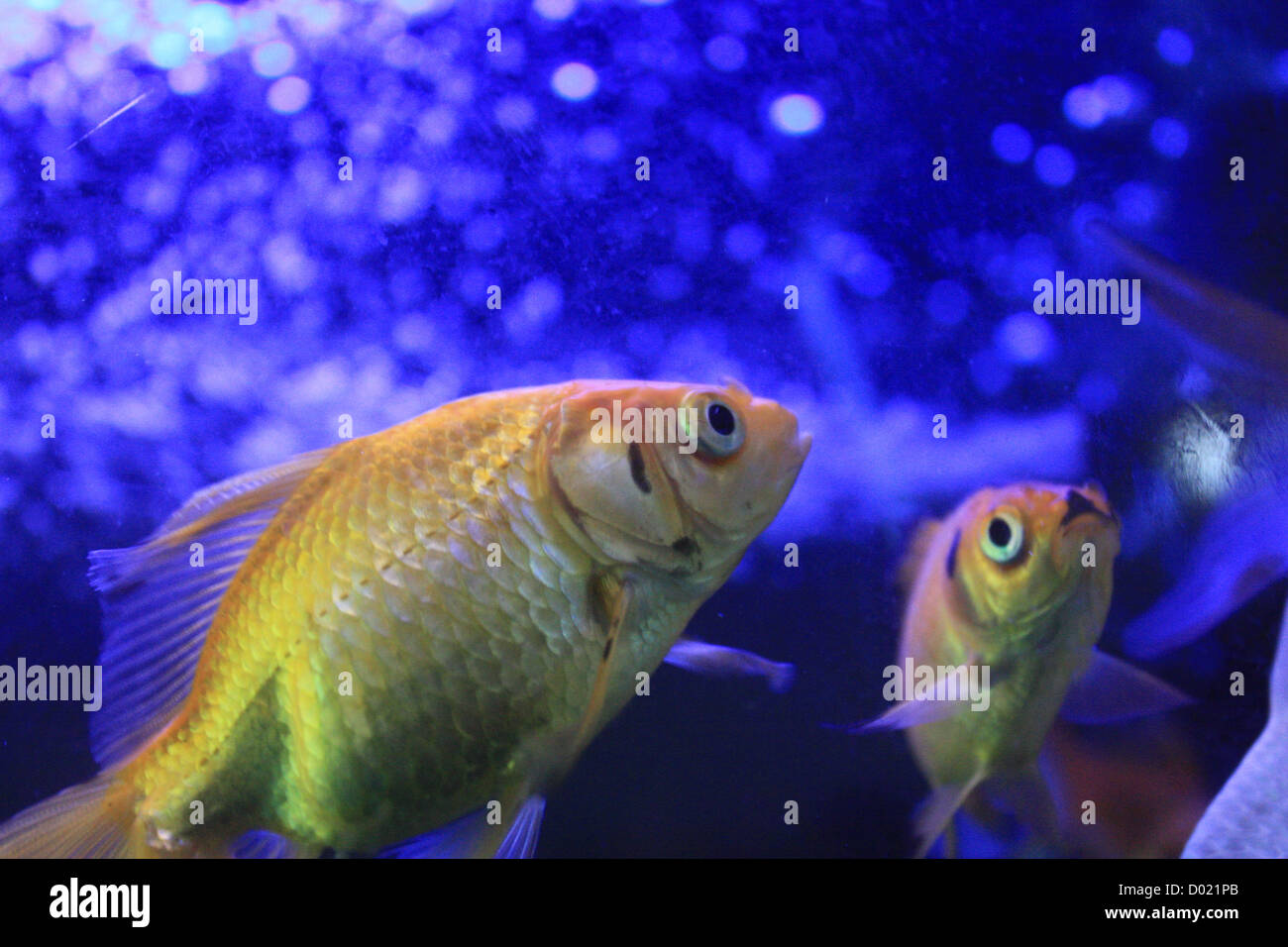 Freshwater Fish, Aquarium Fish, Tropical Fish, Pictures Of Fish, Fish  Tanks, Fish For Sale, All About Fish, Salt Water Fish, Che