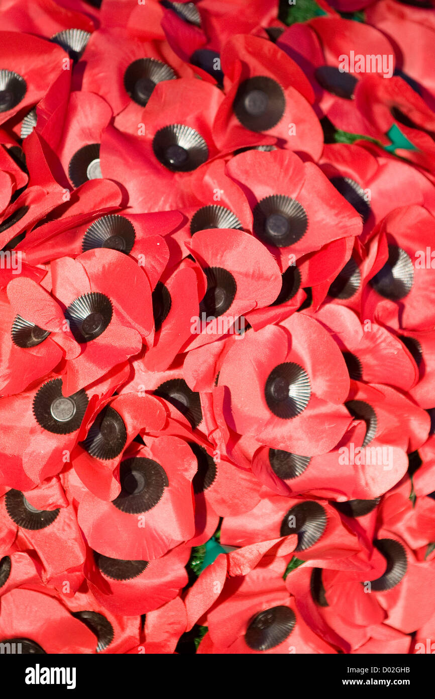 Artificial remembrance poppies on Sunday 2012 - Stock Image