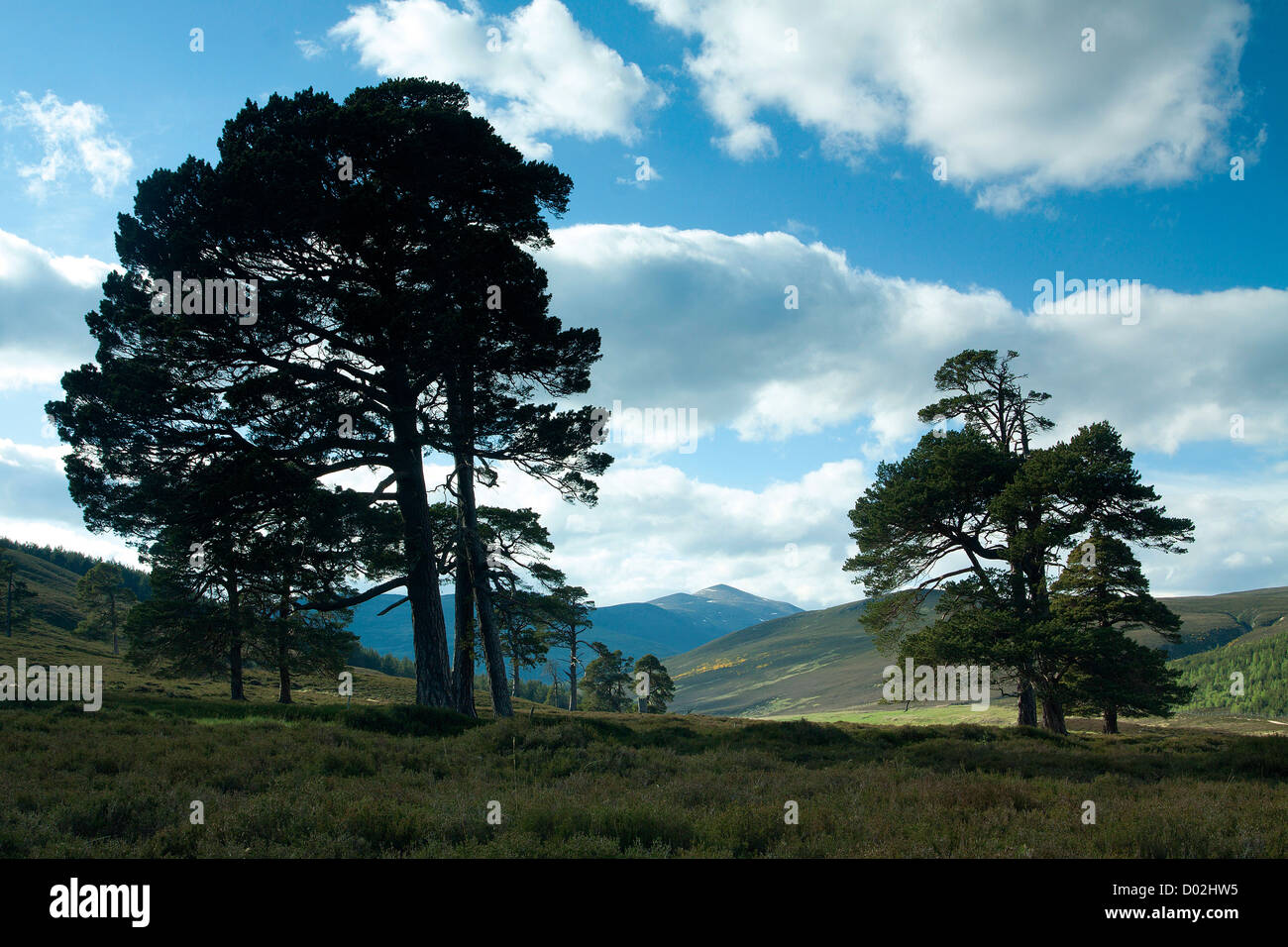Glen Lui from near Derry Lodge, Aberdeenshire - Stock Image