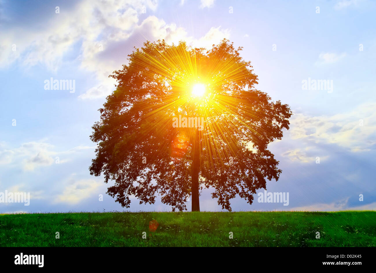 An isolated tree with sunlight effect. Stock Photo