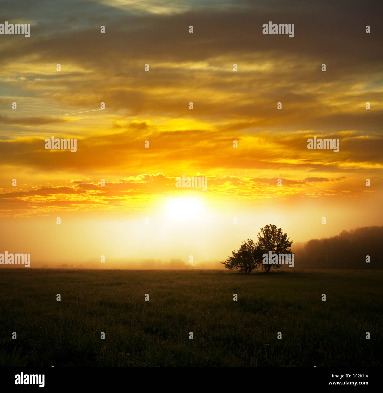 meadow at morning - Stock Image